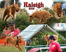 Irish Terrier AKC Agility